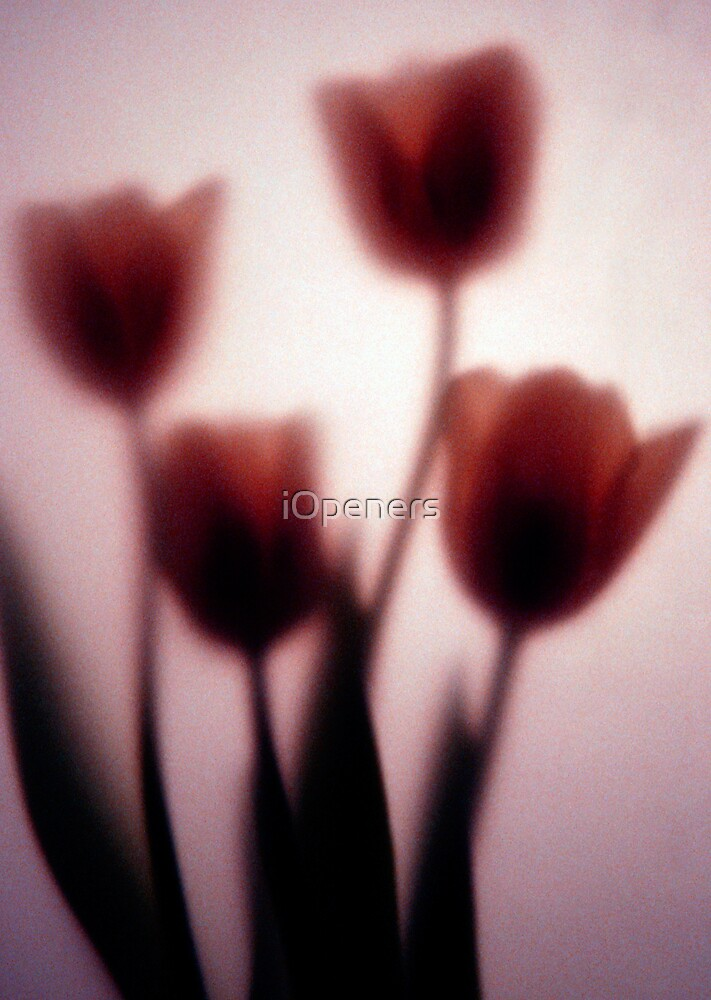 Romance by iOpeners