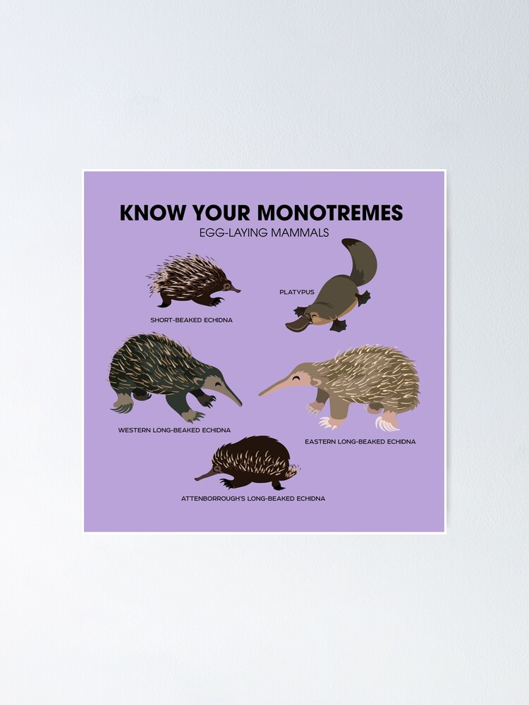 Alternate view of Know Your Monotremes Poster