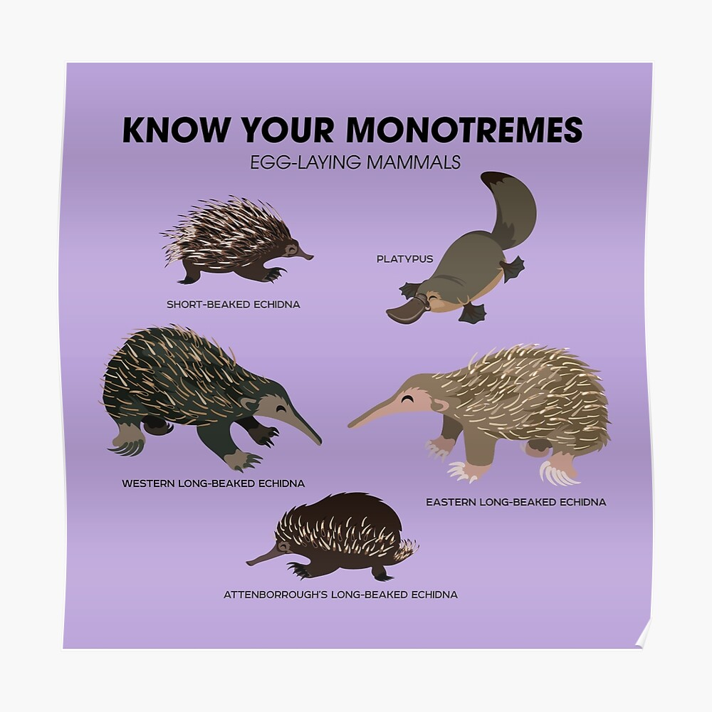 Know Your Monotremes Poster
