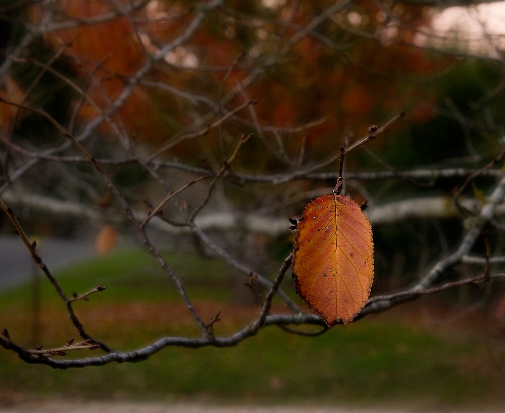 Leaf by John Shortt-Smith