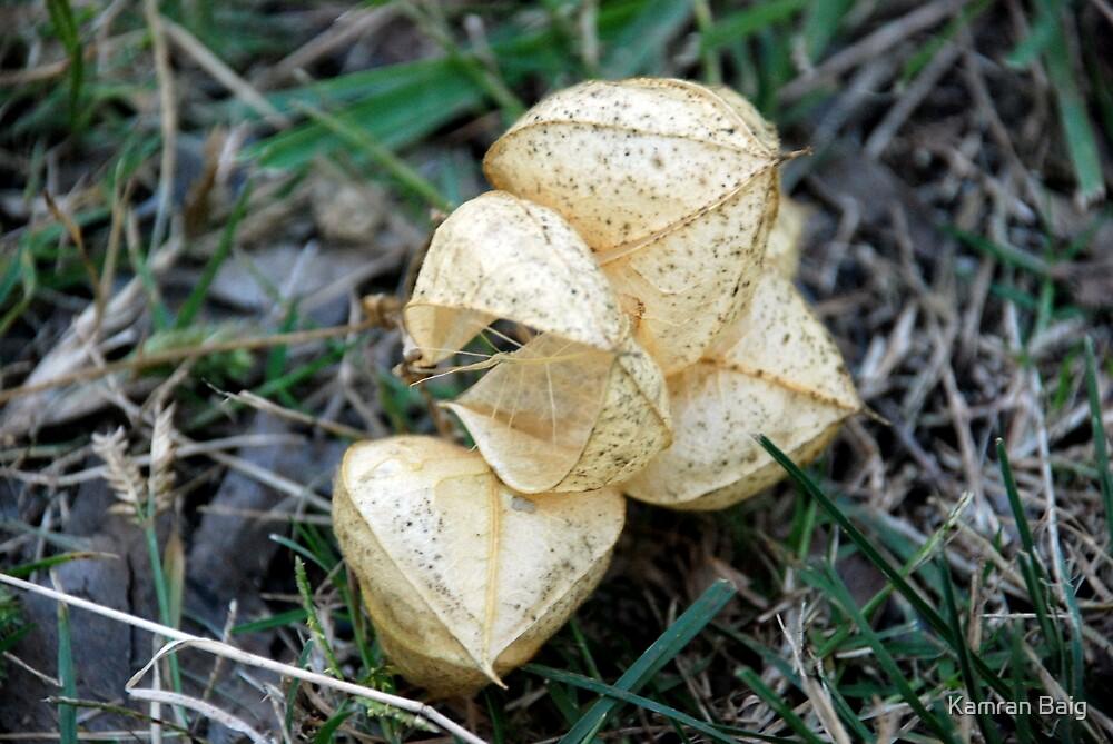 Leaves by Kamran Baig