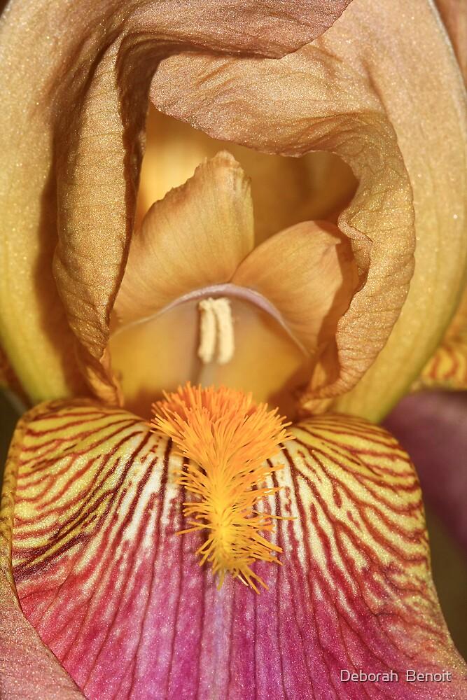 Inner Iris by Deborah  Benoit