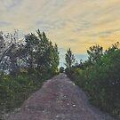 Straße zum Sonnenuntergang von alexlikeart1