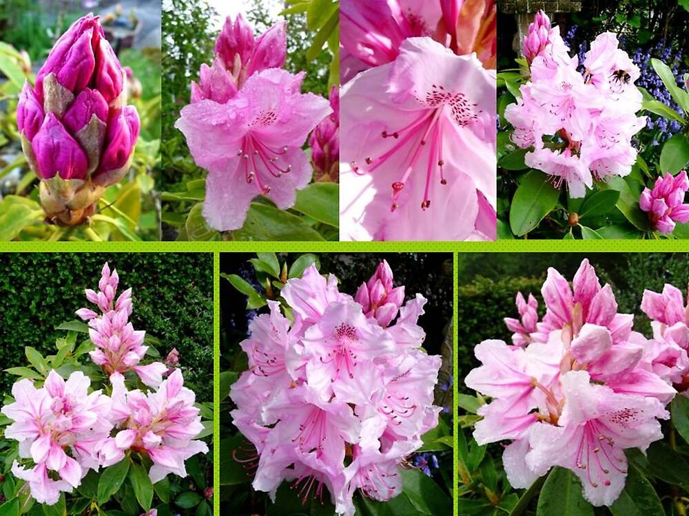 Rhododendron Attack by Braedene