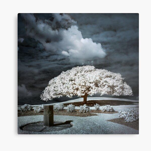 When a Tree Dreams Metal Print