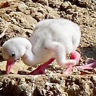 NEW BABY FLAMINGO by Marilyn Grimble