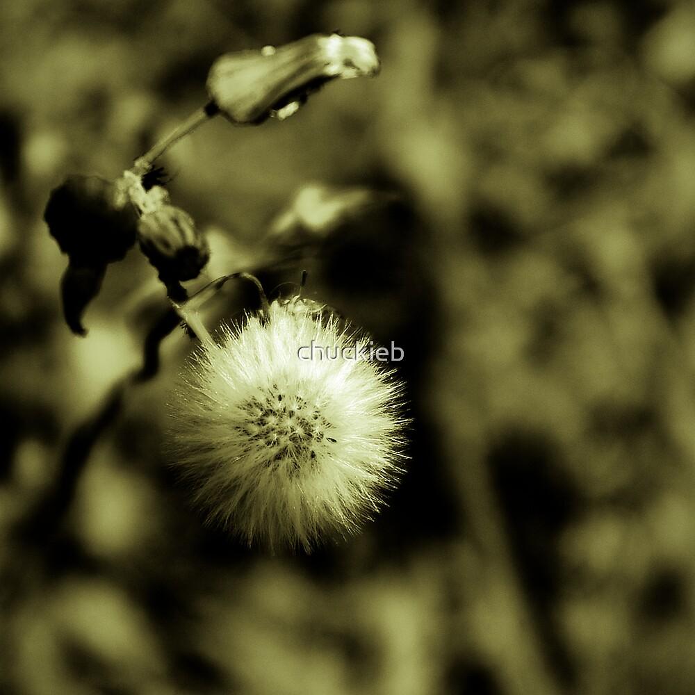 Dream Wish by chuckieb