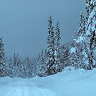 winter in idre fjall sweden  by Barry W  King