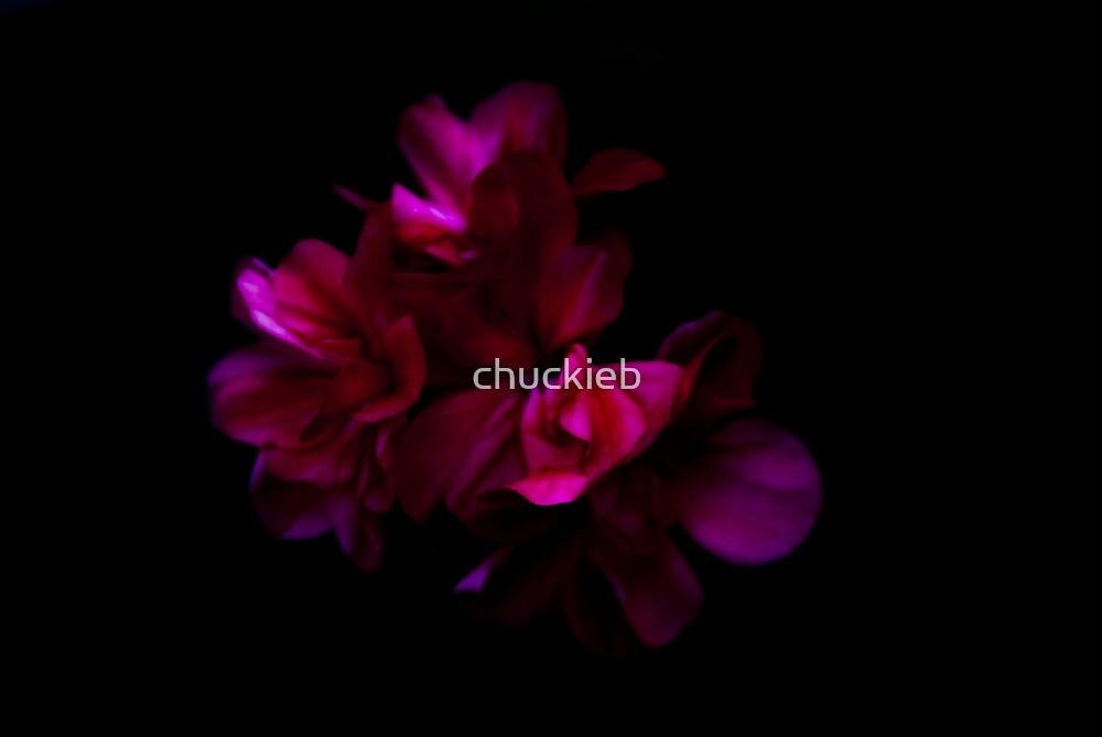 Flower 1 by chuckieb