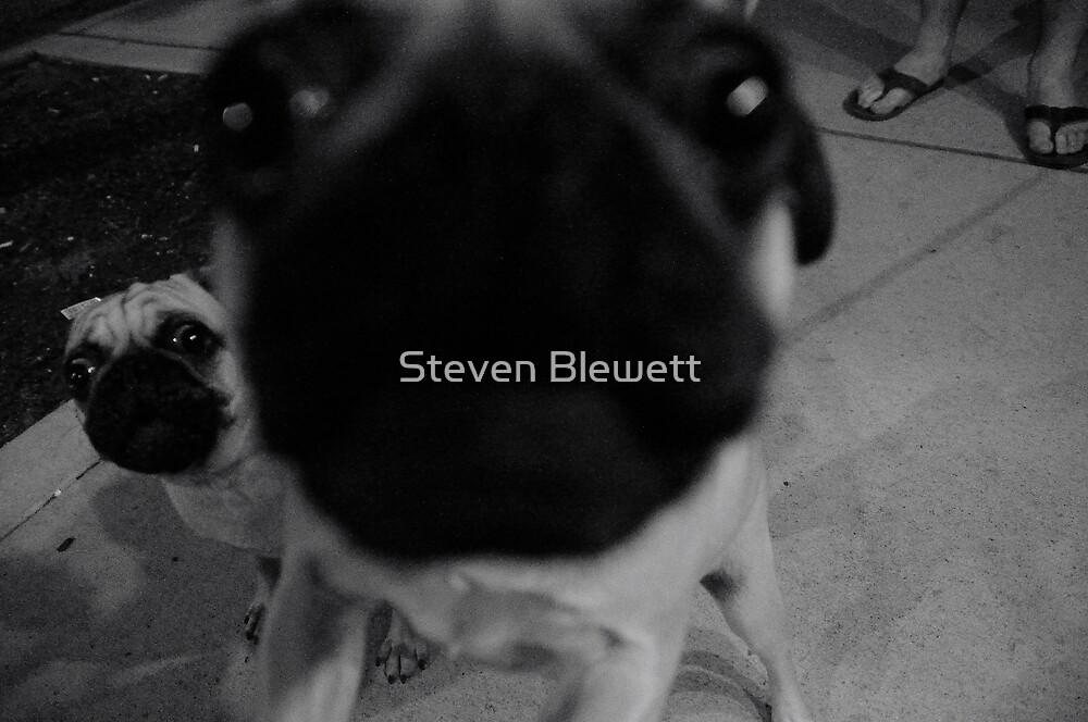 New Friends by Steven Blewett