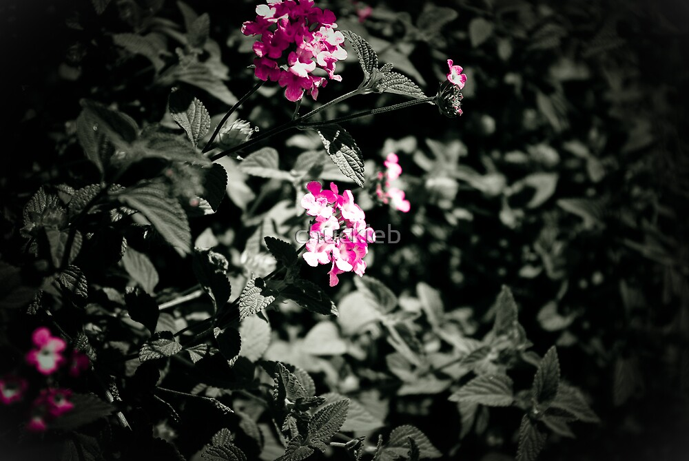 Flower 3 by chuckieb