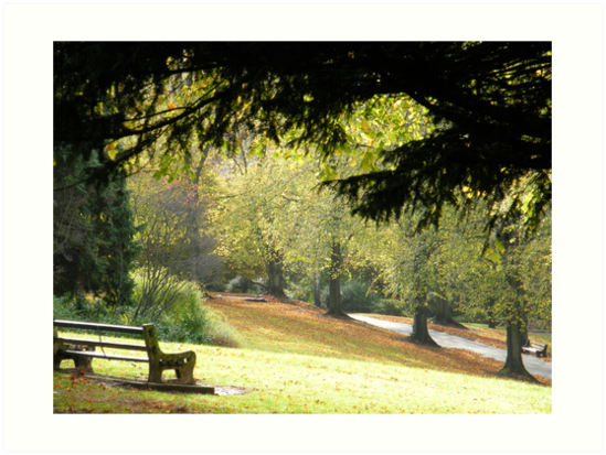 Sit for a while and relax.. in Beechwood park by Joyce Knorz