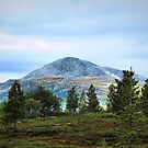 Mountain View In Sweden by Barry W  King