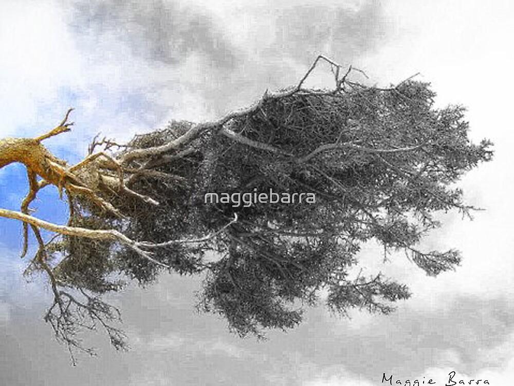 Merlins Tree by maggiebarra
