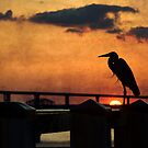 Heron at Sunset by Jonicool