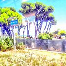 Signpost station and pine forest by Giuseppe Cocco