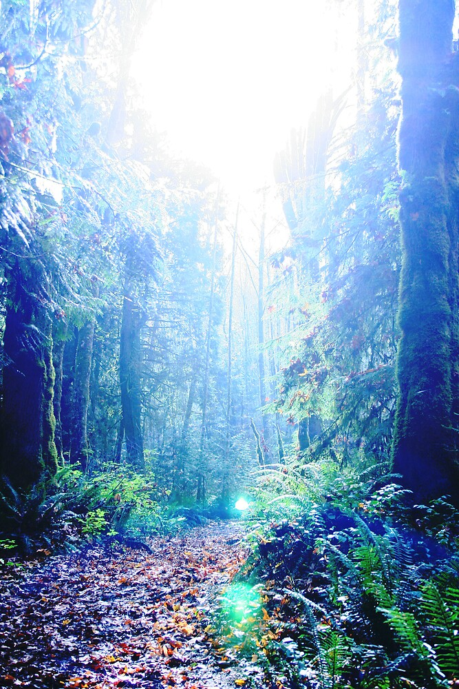 Lighting the Forest by Harmony Sage Lawrence
