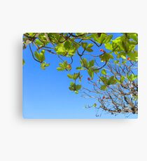 Jamaican Blue Canvas Print