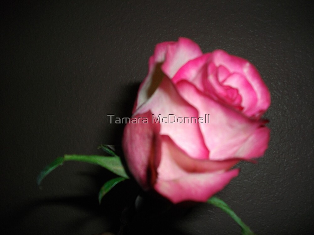 Gifted Rose by Tamara Lindsey