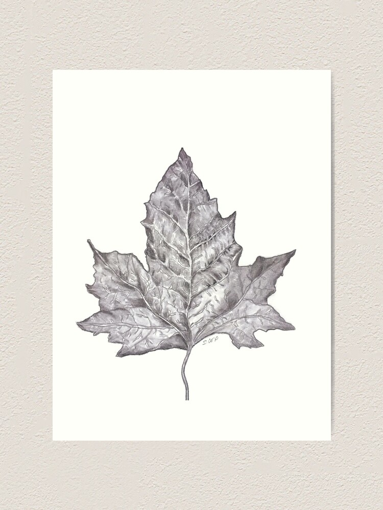 Pencil Drawing Leaf Graphite Nature Sketch Nature Lover Print Art Print By Watercolorfinds Redbubble