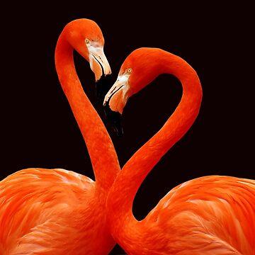 Flamingo by belka