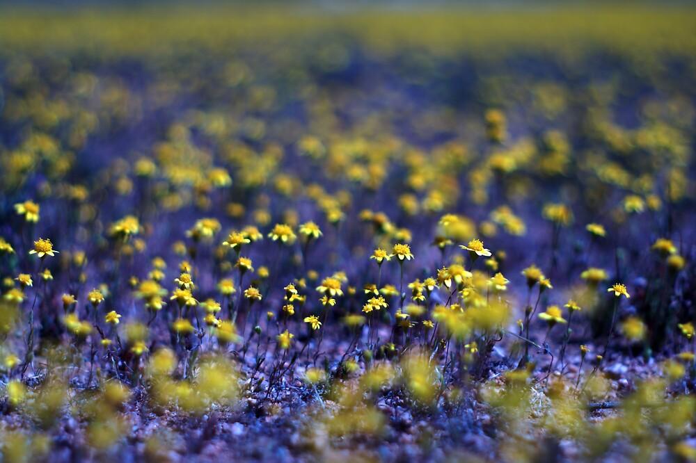 The Poppy Field by JustSaul