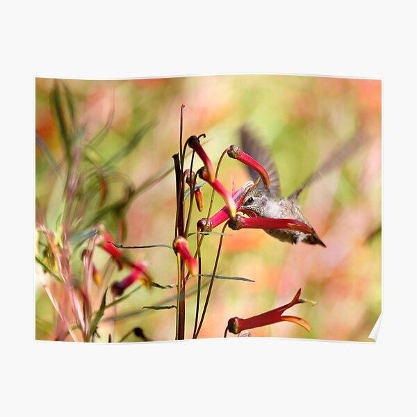 Hummingbird Among Wildflowers Poster