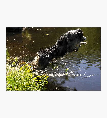 Diving Dog Photographic Print