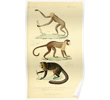 The Animal Kingdom by Georges Cuvier, PA Latreille, and Henry McMurtrie 1834 576 - Mammalia Mammals Poster