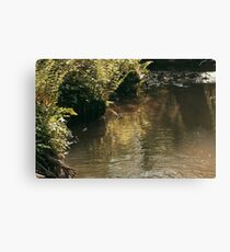 River surrounded by plants Canvas Print