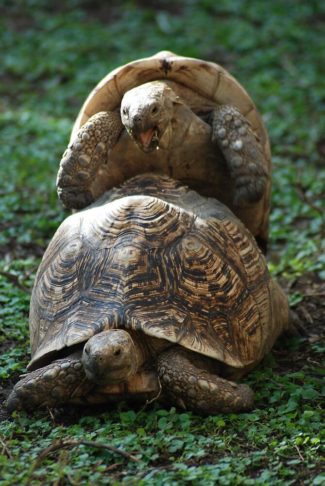 shell sex by Tamara Cornell