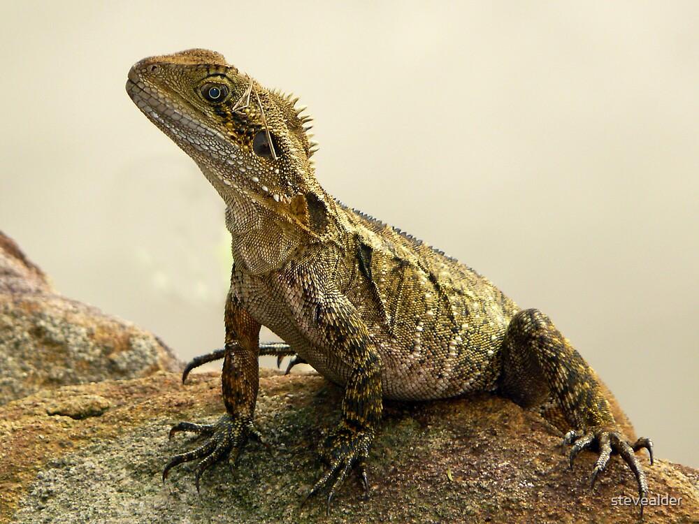 Female Water Dragon by stevealder