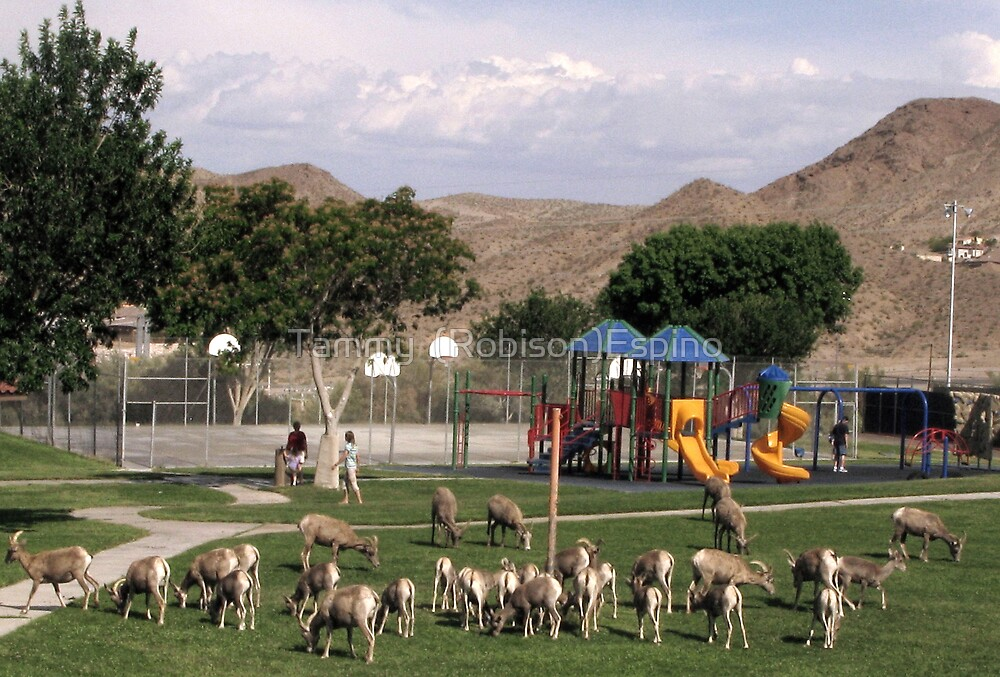 Big horn Sheep interaction by Tammy  (Robison)Espino