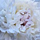 Inside A Beautiful, Fragrant, White Peony by Len Bomba