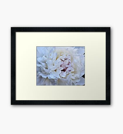 Inside A Beautiful, Fragrant, White Peony Framed Print