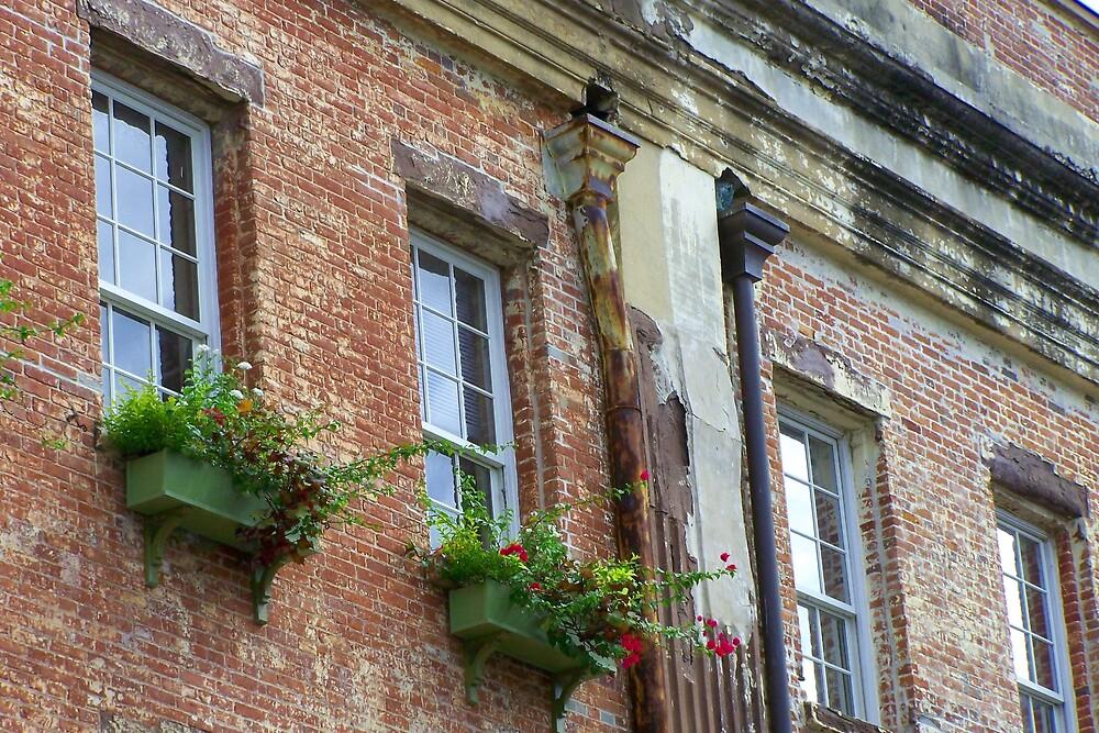 Savannah facade by mipics