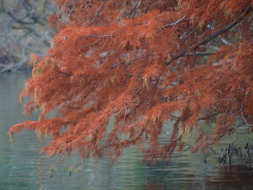 Autumn leaves at lake by rolpa