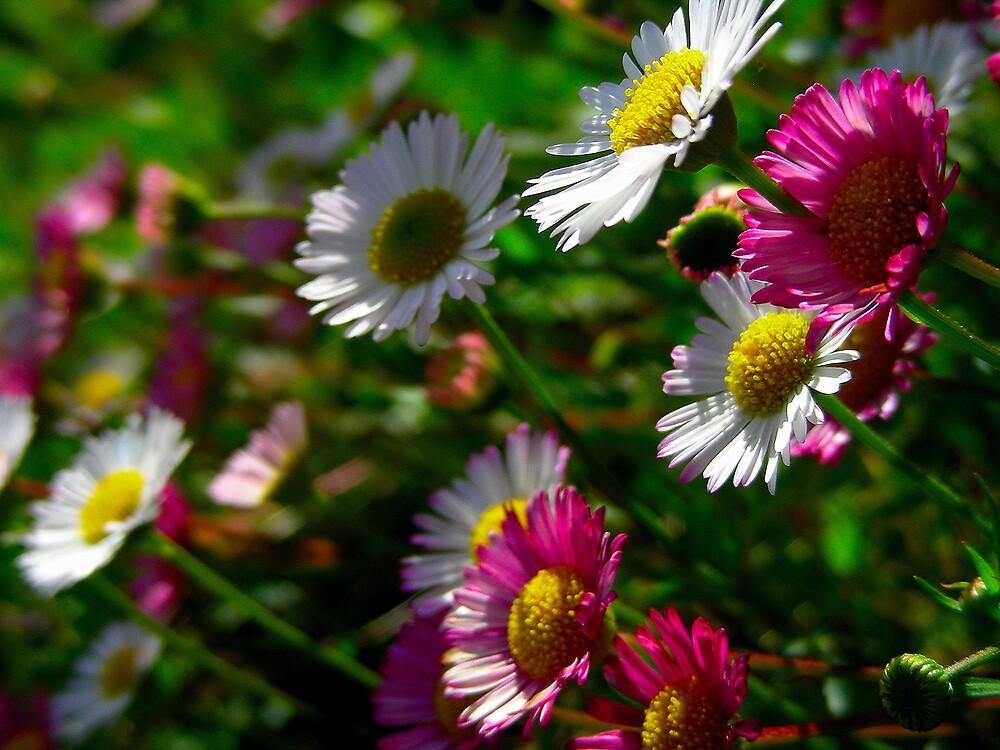 florecitas multicolor.... by cieloverde