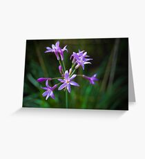 Little Purple Flowers Greeting Card