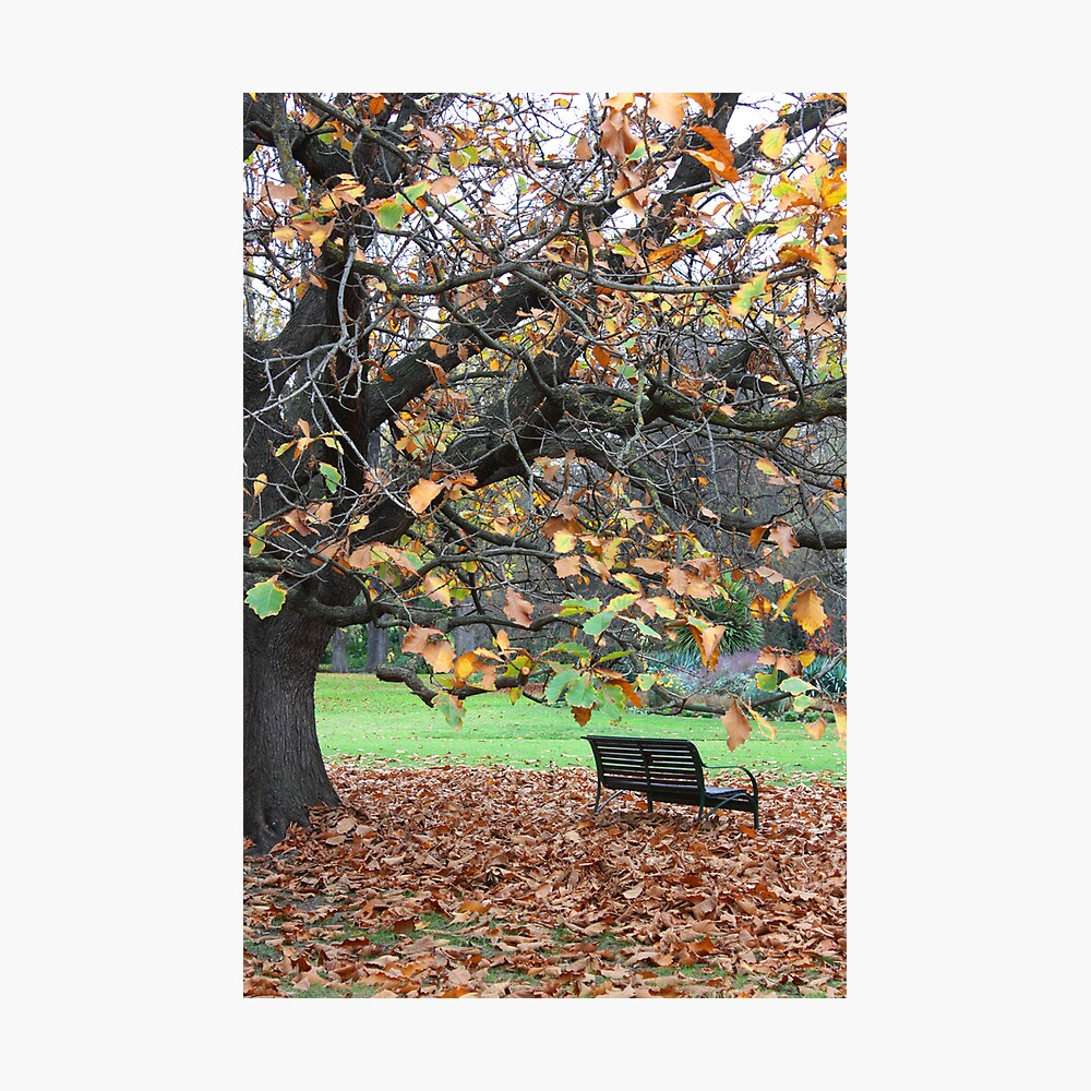 Fitzroy Gardens Photographic Print