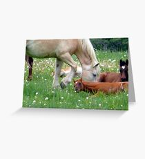 The Colts  Greeting Card