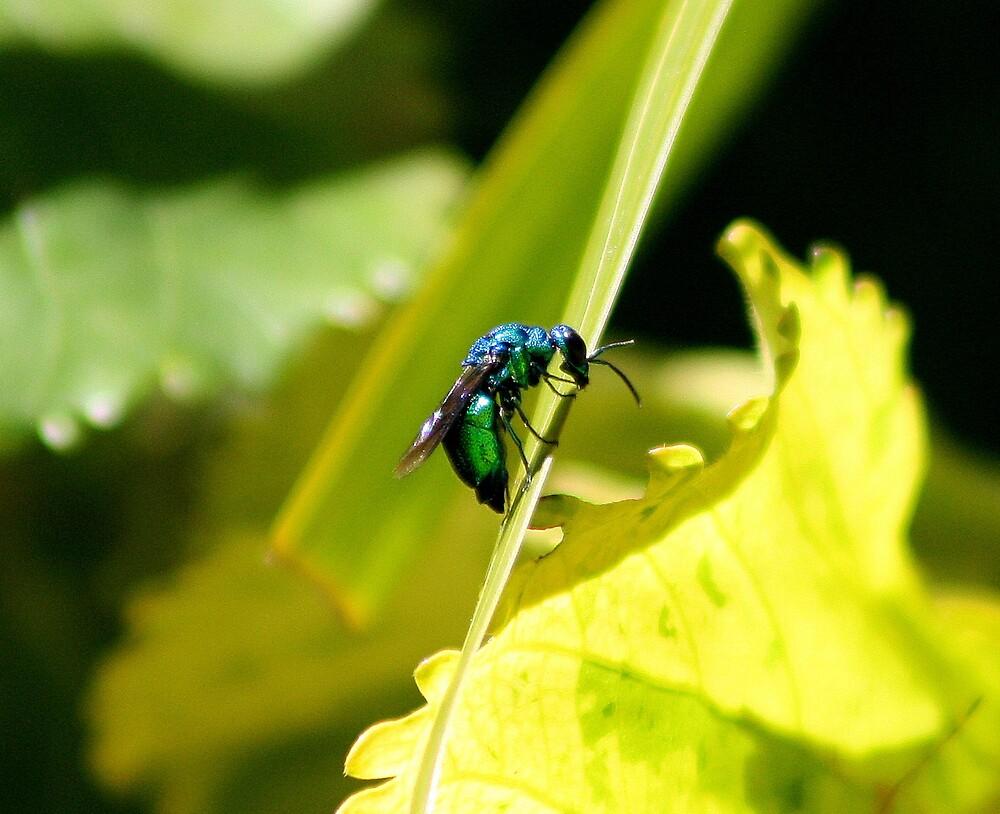 Little green Bee by RJ-Mac