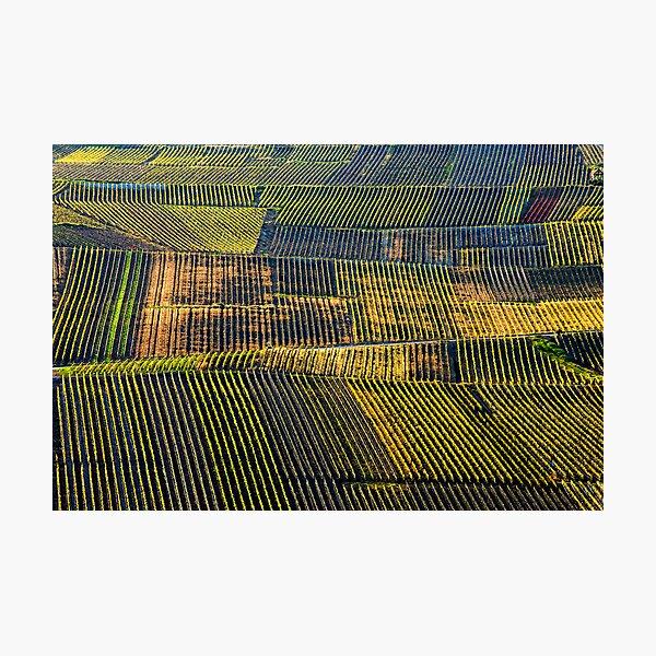 Champagne Mosaic Photographic Print