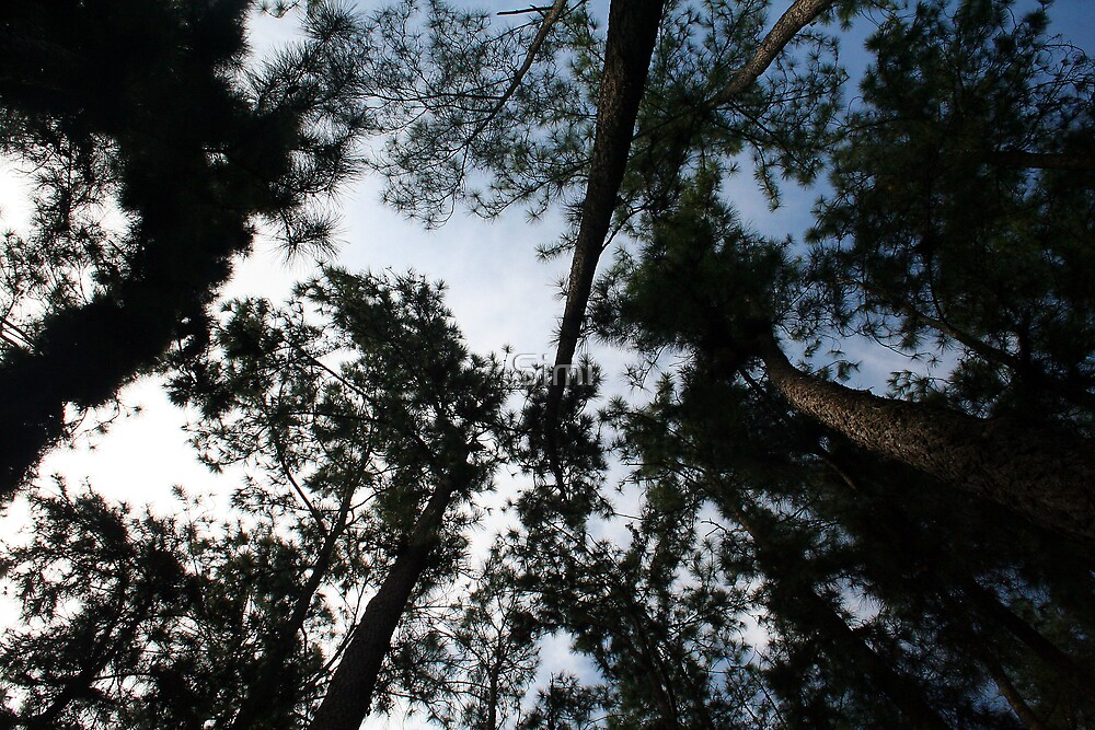 Looking Up by Simi