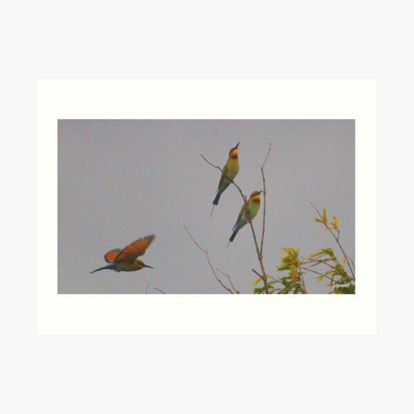 pretty bee-eaters Art Print