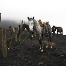 Riding A Horse Up Pacaya Volcano 1 - Antigua - Guatemala - Central America by exploramum
