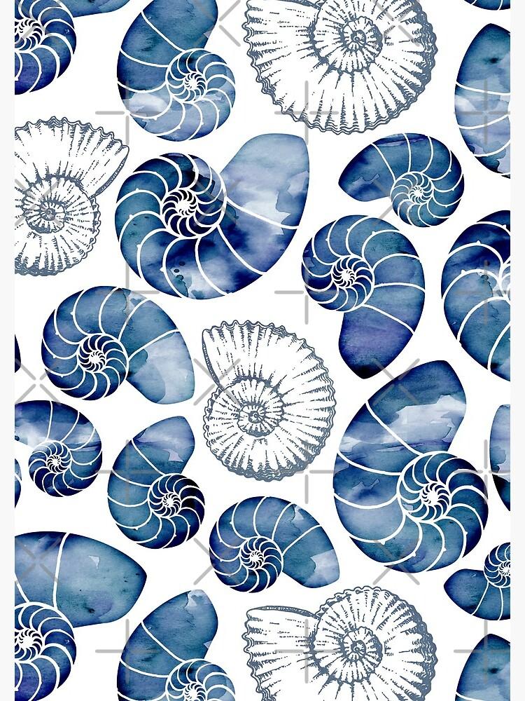 Blue nautilus shells on white by adenaJ