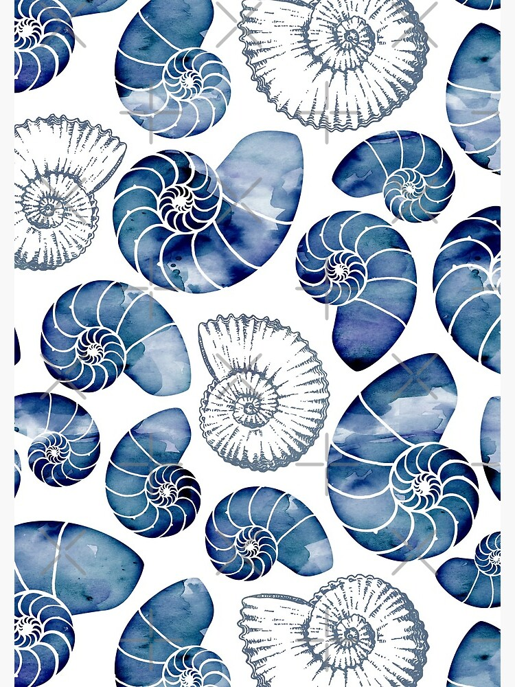 Blue nautilus shells on white by adenaJ