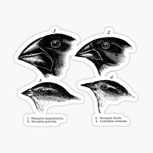 Darwin's Finches Illustration T-Shirt Evolution Atheist Sticker