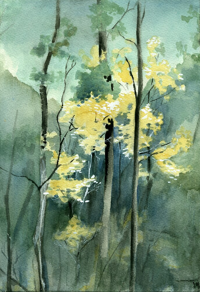 Elm in Eucalypts by liljo